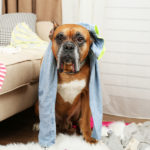 Cleaning Up After Kids or Pets   Stay At Home Mum