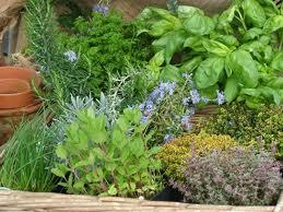 herbs   Stay at Home Mum.com.au