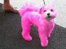 pink dog | Stay at Home Mum.com.au