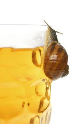 Beer Snail Trap