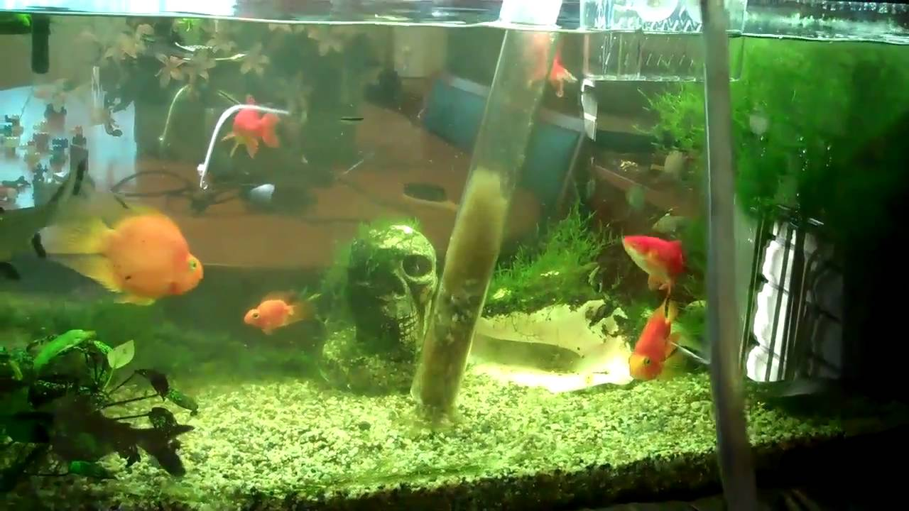 5 tips on how to clean a fish tank properly stay at home mum