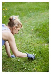 Common Garden Problems and How to Fix Them | Stay at Home Mum