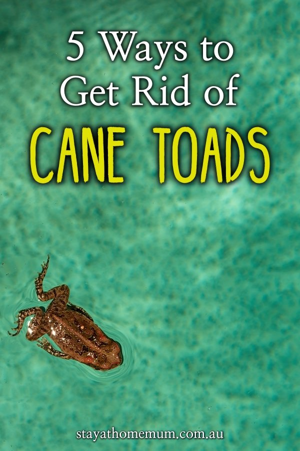 5 Ways to Get Rid of Cane Toads | Stay At Home Mum