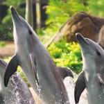 Dolphin Imagine | Stay at Home Mum.com.au