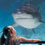 Shark Bay | Stay at Home Mum.com.au