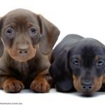 Seven Puppy Care Essentials