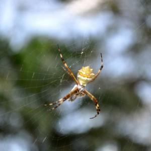 6 Ways To Keep Spiders Away