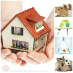 Small Pets For Small Homes | Stay at Home Mum