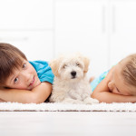 Mistakes New Puppy Parents Make | Stay at Home Mum