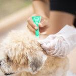 bigstock Close Up Woman Applying Tick A 311288392 | Stay at Home Mum.com.au