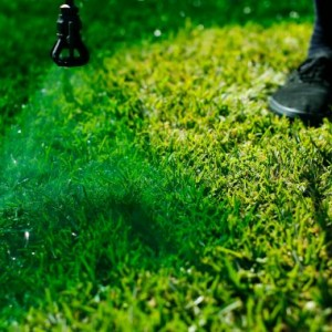 When In Drought? Paint Your Lawn Green