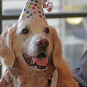 NYC Throws Sweet Sixteen for 9/11 Rescue Dog
