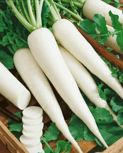 7 Vegetables That Are Easiest To Grow - Stay at Home Mum