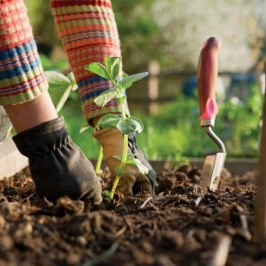 The 7 Vegetables That Are Easiest To Grow