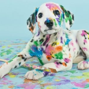 10 of the Guiltiest Dogs on the Internet