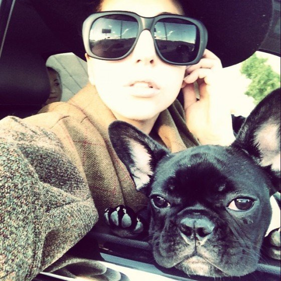 Pampered Pooches of the Rich and Famous | Stay At Home Mum