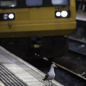 Birds On a Train Is The New Snakes On A Plane
