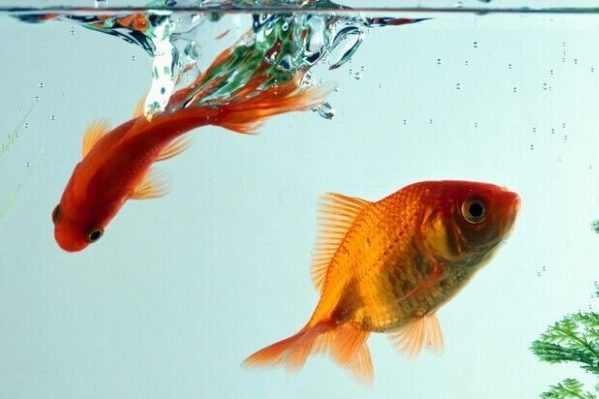 5 tips on how to clean a fish tank properly stay at home mum. Black Bedroom Furniture Sets. Home Design Ideas