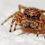 First Aid: How To Treat A Spider Bite