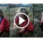 ewe   Stay at Home Mum.com.au