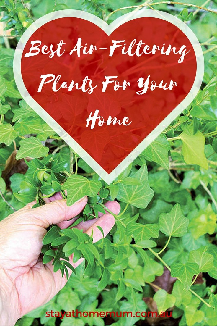 Best air filtering plants for your home stay at home mum for Best air filtering houseplants