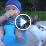 When Bunny Does This Baby Does not Know What Hit Him   Stay at Home Mum.com.au
