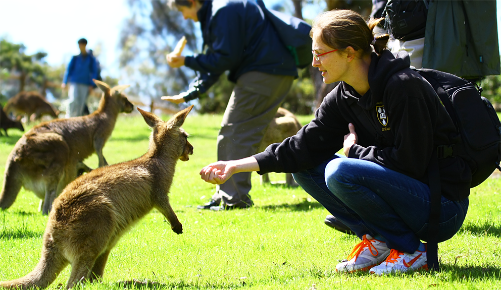 10 Family Friendly Things To Do In Tasmania | Stay At Home Mum