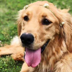 10 Breeds Of Dogs Suited To Family Life And Children