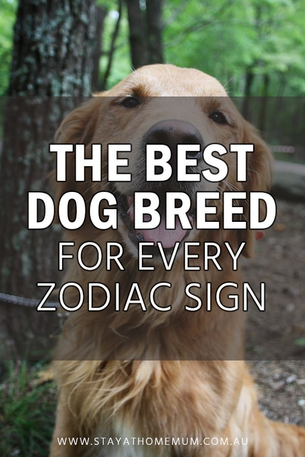 The Best Dog Breed for Every Zodiac Sign