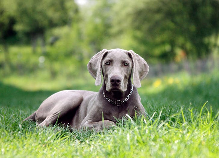 The Best Dog Breed for Every Zodiac Sign   Stay At Home Mum