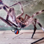 Mum Captures 'David And Goliath' Battle Between Deadly Spiders In Her Mailbox   Stay at Home Mum