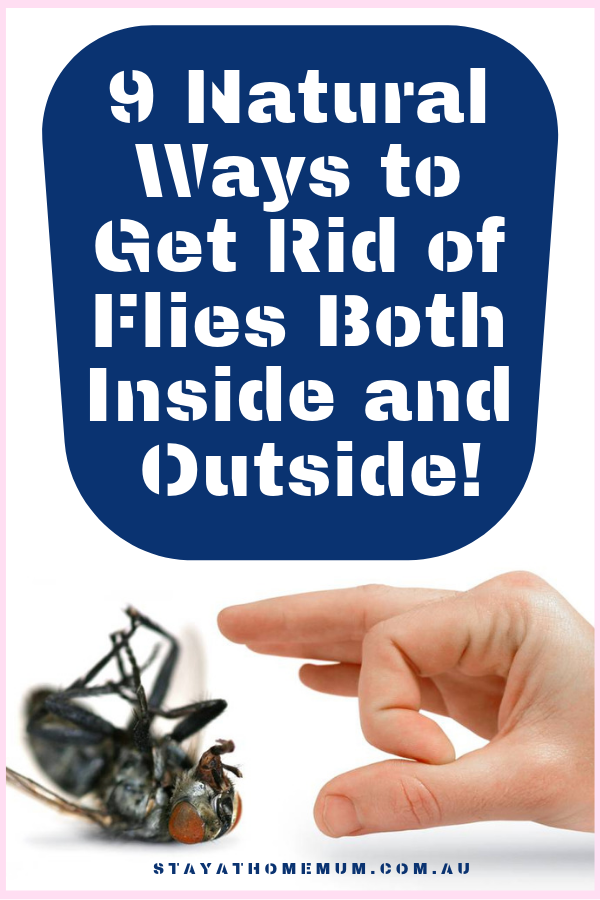 9 Natural Ways To Get Rid of Flies Both Inside and Outside | Stay At Home Mum