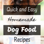 5 Quick and Easy Homemade Dog Food Recipes