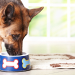 Quick and Easy Homemade Dog Food Recipes