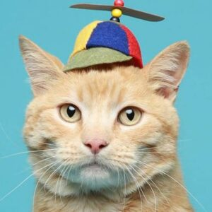 14 Ridiculously Cute Hats for Cats