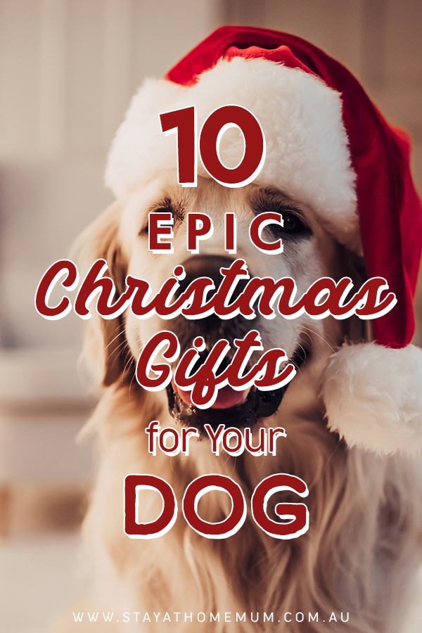 10 Epic Christmas Gifts for Your Dog | Stay at Home Mum