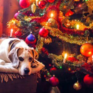 15 Christmas Gifts for your Dog