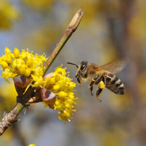 How to Plant a Bee Friendly Garden
