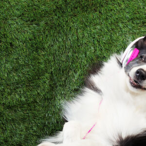 Did You Know? Spotify Has A Playlist and Podcast for Dogs to Listen To