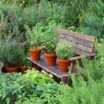 herbs | Stay at Home Mum.com.au