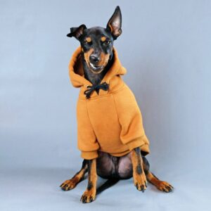 Socks, Jackets, Sweaters and Everything Your Dog Needs To Keep Warm This Winter