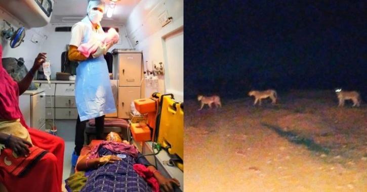 Lions 5ec671b3b48a4 | Stay at Home Mum.com.au